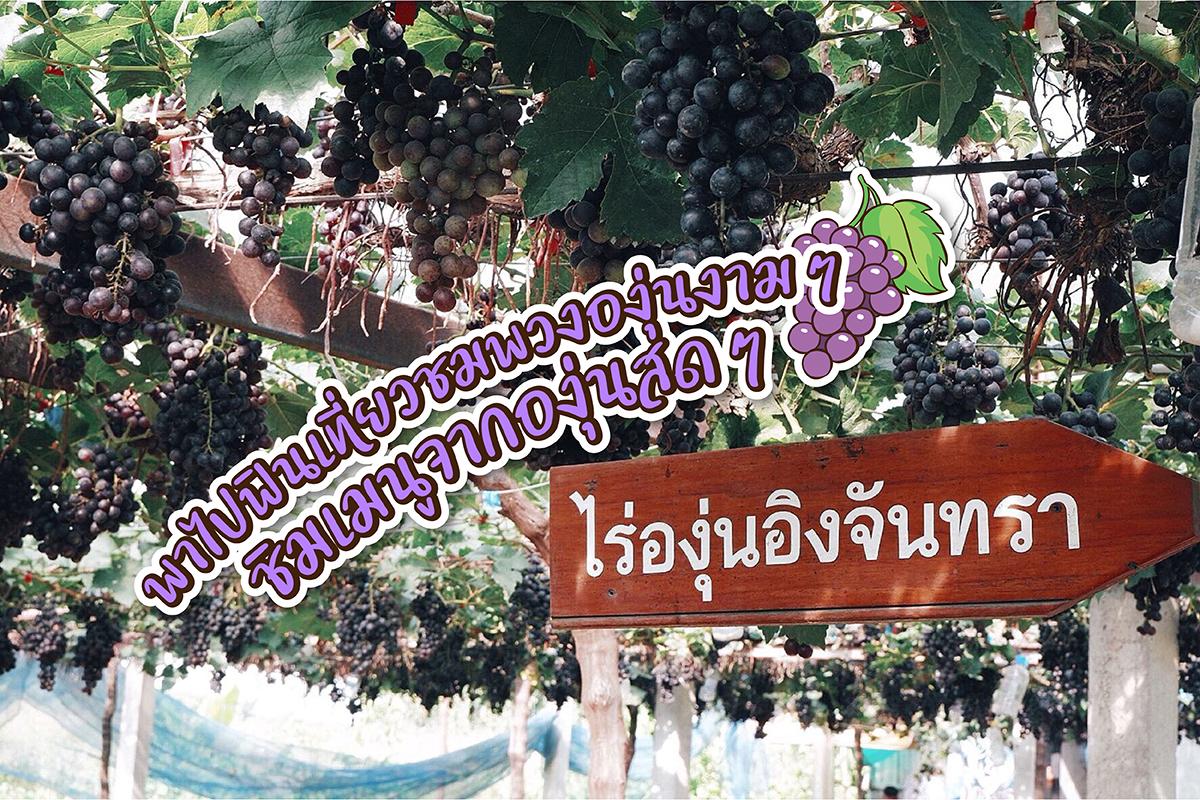 #เที่ยงนี้กินไรดี #EP16 พาไปฟินเที่ยวชมพวงองุ่นงามๆ ชิมเมนูจากองุ่นสดๆ @ไร่องุ่น อิงจันทรา
