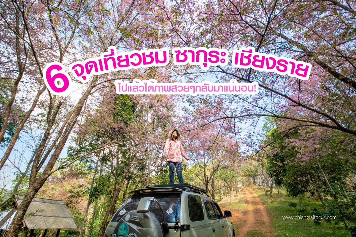 ดอกซากุระบานแล้ว ไปเที่ยวชมได้!! : รวมสถานที่เที่ยวชม ดอกซากุระ เชียงราย สีชมพูหวานไปทั้งดอย